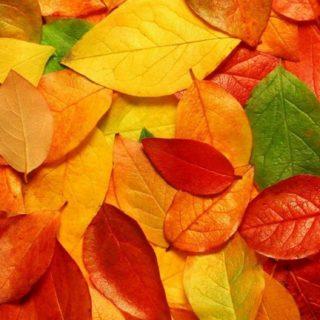 自然落ち葉橙の iPhone5s / iPhone5c / iPhone5 壁紙