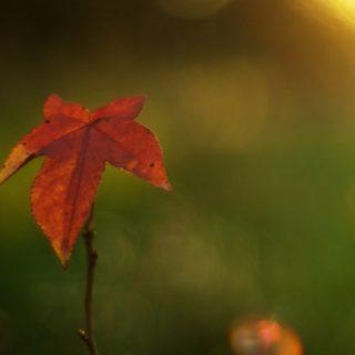 風景自然紅葉の iPhone5s / iPhone5c / iPhone5 壁紙