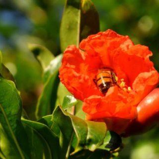 自然動物花蜂の iPhone5s / iPhone5c / iPhone5 壁紙