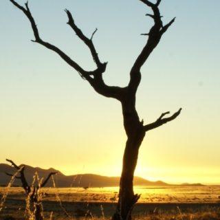 風景枯れ木の iPhone5s / iPhone5c / iPhone5 壁紙