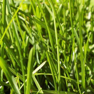 自然草緑の iPhone5s / iPhone5c / iPhone5 壁紙