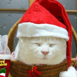 猫クリスマスの iPhone5s / iPhone5c / iPhone5 壁紙