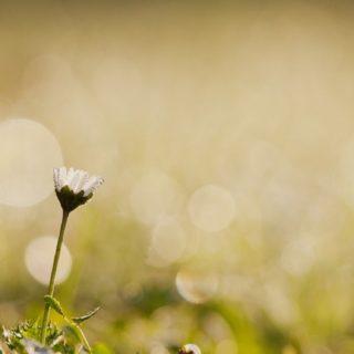 自然花の iPhone5s / iPhone5c / iPhone5 壁紙