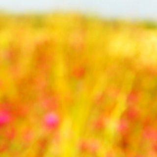 風景自然花の iPhone5s / iPhone5c / iPhone5 壁紙
