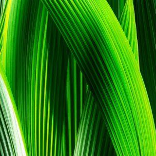 自然葉緑の iPhone5s / iPhone5c / iPhone5 壁紙