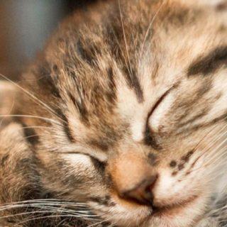 猫睡眠の iPhone5s / iPhone5c / iPhone5 壁紙