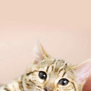 猫の iPhone5s / iPhone5c / iPhone5 壁紙