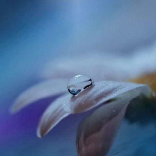 自然花青の iPhone5s / iPhone5c / iPhone5 壁紙