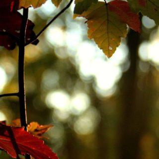 自然紅葉の iPhone5s / iPhone5c / iPhone5 壁紙
