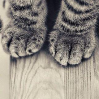 猫前足の iPhone5s / iPhone5c / iPhone5 壁紙