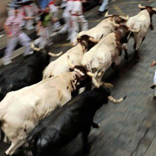 動物風景牛の iPhone5s / iPhone5c / iPhone5 壁紙