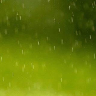 風景雨緑ぼかしの iPhone5s / iPhone5c / iPhone5 壁紙