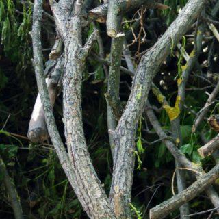 風景自然木枝の iPhone5s / iPhone5c / iPhone5 壁紙