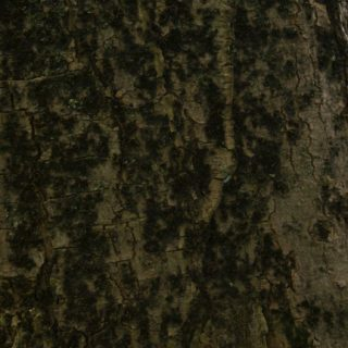 木苔緑茶の iPhone5s / iPhone5c / iPhone5 壁紙
