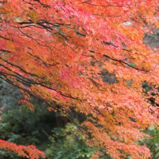 風景紅葉自然の iPhone5s / iPhone5c / iPhone5 壁紙