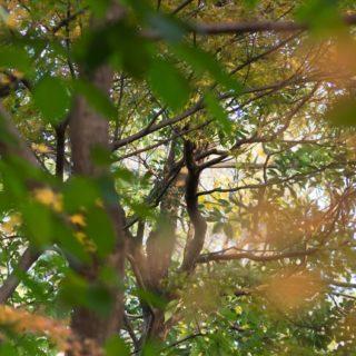 風景自然木の iPhone5s / iPhone5c / iPhone5 壁紙