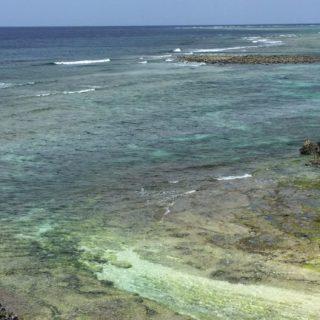 風景海南国青空の iPhone5s / iPhone5c / iPhone5 壁紙