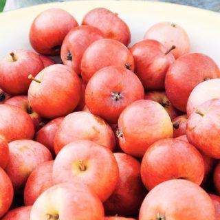 フードリンゴ赤の iPhone5s / iPhone5c / iPhone5 壁紙