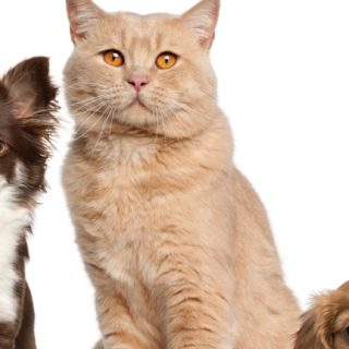 猫犬動物女子向けの iPhone5s / iPhone5c / iPhone5 壁紙