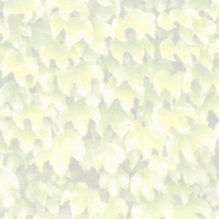 葉模様黄の iPhone5s / iPhone5c / iPhone5 壁紙