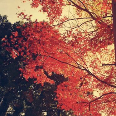 紅葉 風景の iPhone6s / iPhone6 壁紙