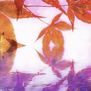 紅葉 水面の iPhone6s / iPhone6 壁紙