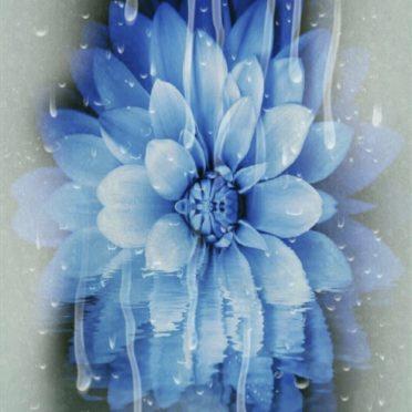 花 青の iPhone6s / iPhone6 壁紙