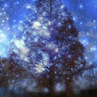木 夜空の iPhone6s / iPhone6 壁紙