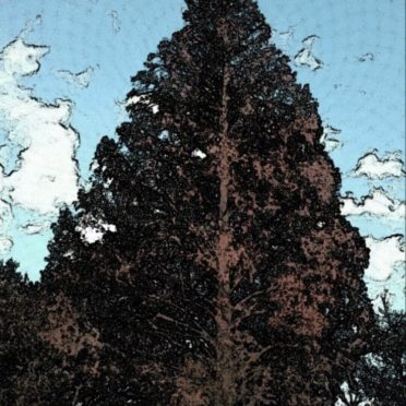 木 公園の iPhone6s / iPhone6 壁紙