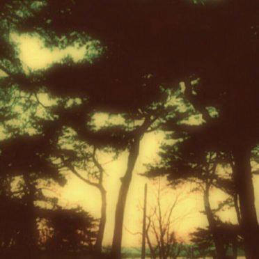 海 防砂林の iPhone6s / iPhone6 壁紙