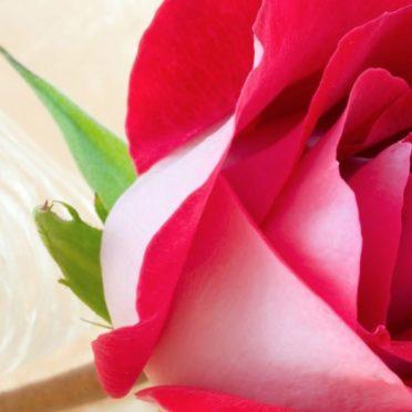 自然花赤の iPhone6s / iPhone6 壁紙