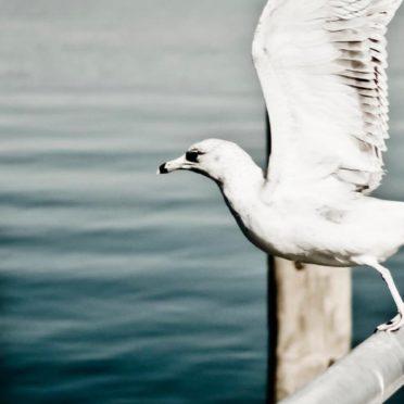 動物鳥白の iPhone6s / iPhone6 壁紙