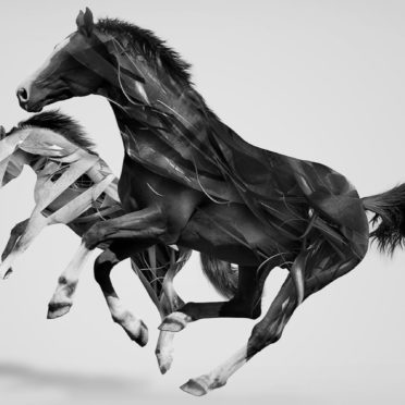 動物馬の iPhone6s / iPhone6 壁紙