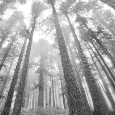 風景森モノクロの iPhone6s / iPhone6 壁紙