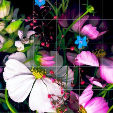 花カラフル黒罫線棚の iPhone6s / iPhone6 壁紙