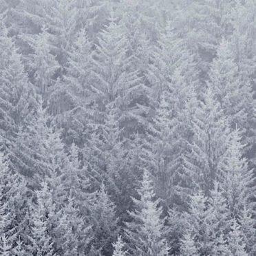 風景森雪白の iPhone6s / iPhone6 壁紙