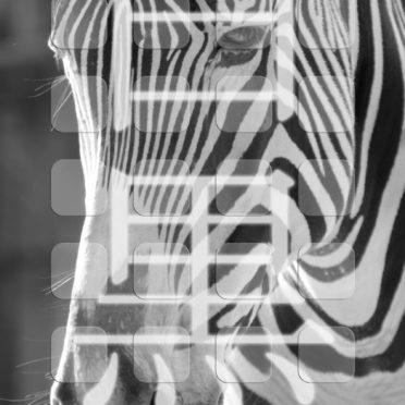 動物シマウマモノクロ棚の iPhone6s / iPhone6 壁紙