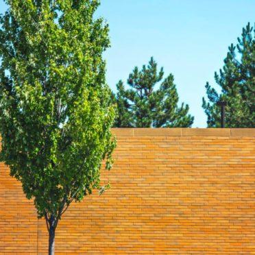 風景木の iPhone6s / iPhone6 壁紙