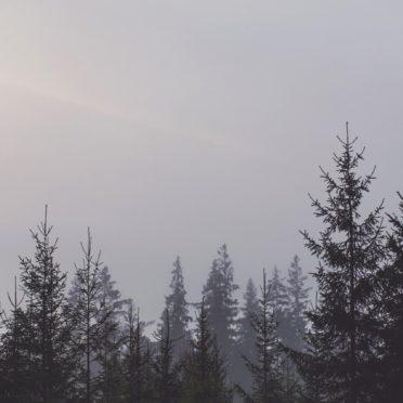 風景森林空の iPhone6s / iPhone6 壁紙