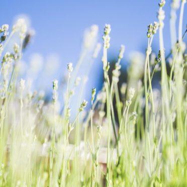 風景植物緑青の iPhone6s / iPhone6 壁紙