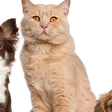 猫犬動物女子向けの iPhone6s / iPhone6 壁紙