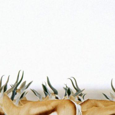 動物鹿の iPhone6s / iPhone6 壁紙
