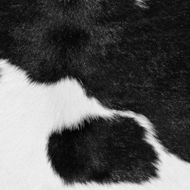毛皮丸白黒青の iPhone6s / iPhone6 壁紙