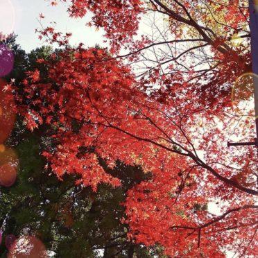 紅葉 風景の iPhone7 壁紙