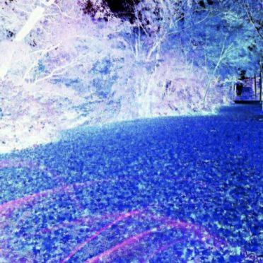 木々 ブルーの iPhone7 壁紙