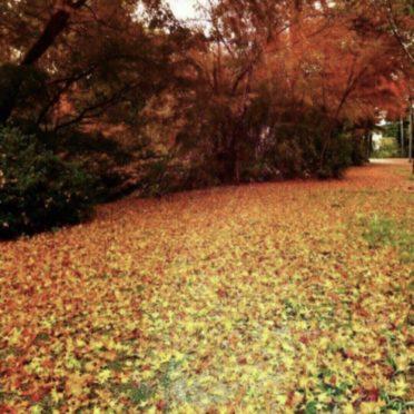 紅葉 落ち葉の iPhone7 壁紙