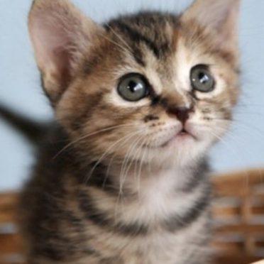 子猫 かわいいの iPhone7 壁紙