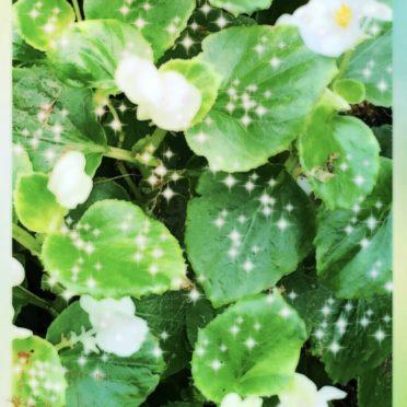 花 鳥の iPhone7 壁紙