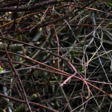 自然木枝の iPhone7 壁紙