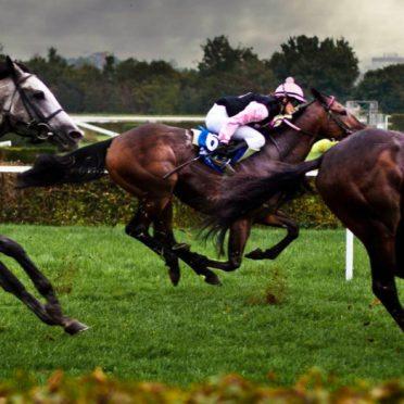動物馬レースの iPhone7 壁紙